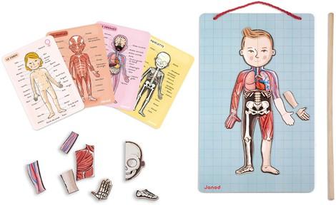 Body Magnet L'Anatomie – 11 langues
